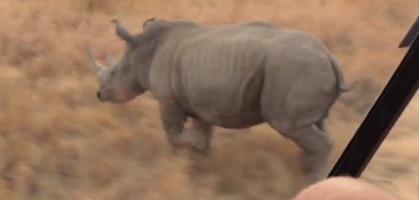 SAC joins rhino fight